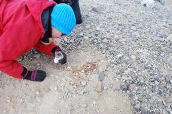 Ashley excavating