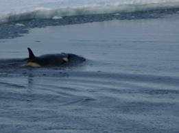 Beaufort Island 29 Jan0105.jpg