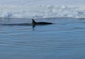 Beaufort Island 29 Jan0097.jpg