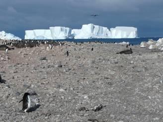 Beaufort Island 29 Jan0009.jpg