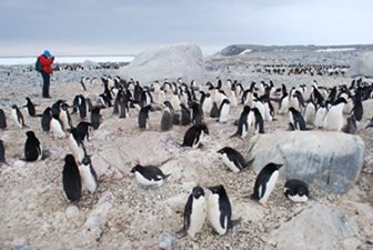 Inexpressible Island penguin colony