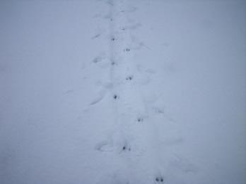 toboggan tracks
